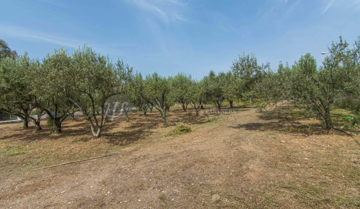 for_sale_plot_7000_sq.m_house_swea_view_ermioni_greece (17)