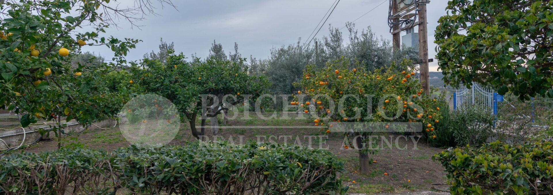 for_sale_two_houses_plot_2000_sq.m._view_ermioni_greece 1 (16)